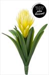 Uk Aechmea 32cm yellow - velkoobchod, dovoz květin, řezané květiny Brno