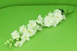 Uk Delphinium 128cm cream - velkoobchod, dovoz květin, řezané květiny Brno
