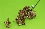 Uk Cosmos metallic 68cm copper - velkoobchod, dovoz květin, řezané květiny Brno