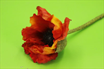 Uk Poppy x1/60cm orange - velkoobchod, dovoz květin, řezané květiny Brno