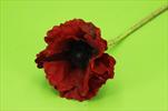 Uk Poppy x1/60cm red - velkoobchod, dovoz květin, řezané květiny Brno