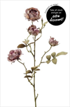 Uk Rose cabbage 58cm light purple - velkoobchod, dovoz květin, řezané květiny Brno