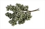Su Stem Juniper Berry 4ks 25cm green - velkoobchod, dovoz květin, řezané květiny Brno