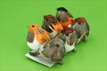 Ptáček na klipu 6ks/12cm - velkoobchod, dovoz květin, řezané květiny Brno