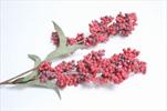 Bobulky na Stonku Červené 60cm - velkoobchod, dovoz květin, řezané květiny Brno