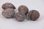 Mintolla Ball Whitewashed 20ks - velkoobchod, dovoz květin, řezané květiny Brno