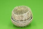 Miska Basic coconut half 3pcs/10-14cm - velkoobchod, dovoz květin, řezané květiny Brno