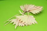 Su Sun cut 5pcs pink - velkoobchod, dovoz květin, řezané květiny Brno
