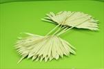 Su Sun cut 5pcs green - velkoobchod, dovoz květin, řezané květiny Brno