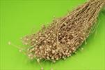 Su lino grass 100g orange - velkoobchod, dovoz květin, řezané květiny Brno