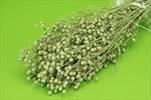 Su lino grass 100g green - velkoobchod, dovoz květin, řezané květiny Brno