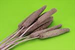Su babala 70-75cm/10pcs pink - velkoobchod, dovoz květin, řezané květiny Brno