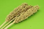 Su indian corn 70-75cm/3pcs yellow - velkoobchod, dovoz květin, řezané květiny Brno