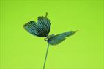 DO Motýl zápich - velkoobchod, dovoz květin, řezané květiny Brno